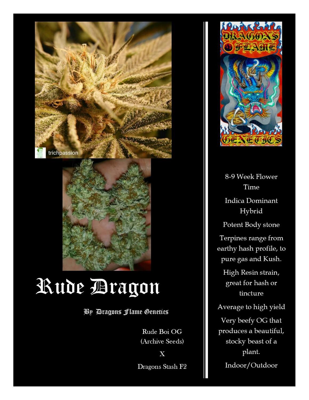 Dragons Flame Genetics Rude Dragon