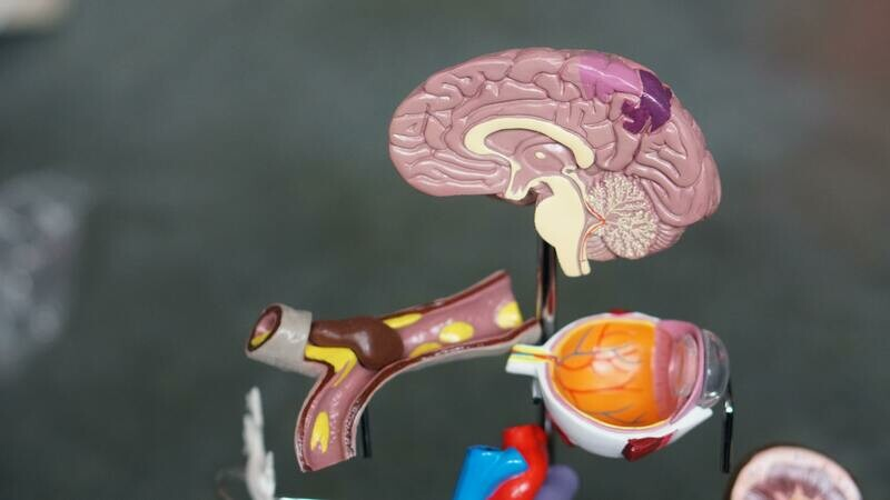 Anatomy & Physiology Level 3 Diploma