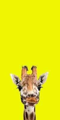 Frederick - The Endangered Series, Giraffe