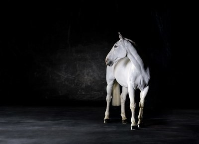 Liberty - The Horse Series
