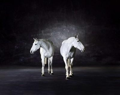 Symmetry ll - The Horse series