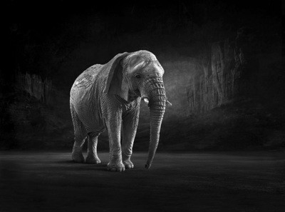 Matriarch - The Endangered Series, Elephant