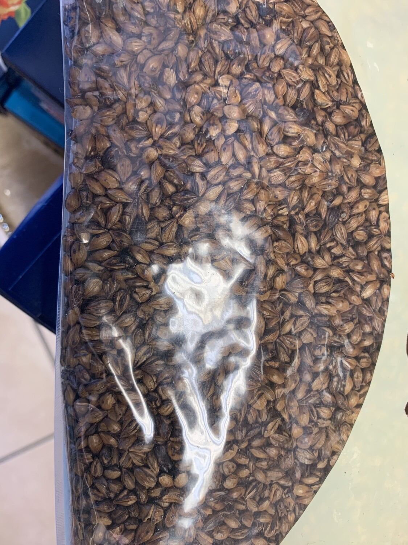 Roasted Barley for Tella 1KG የተቆላ ገብስ ለጠላ ኪሎ