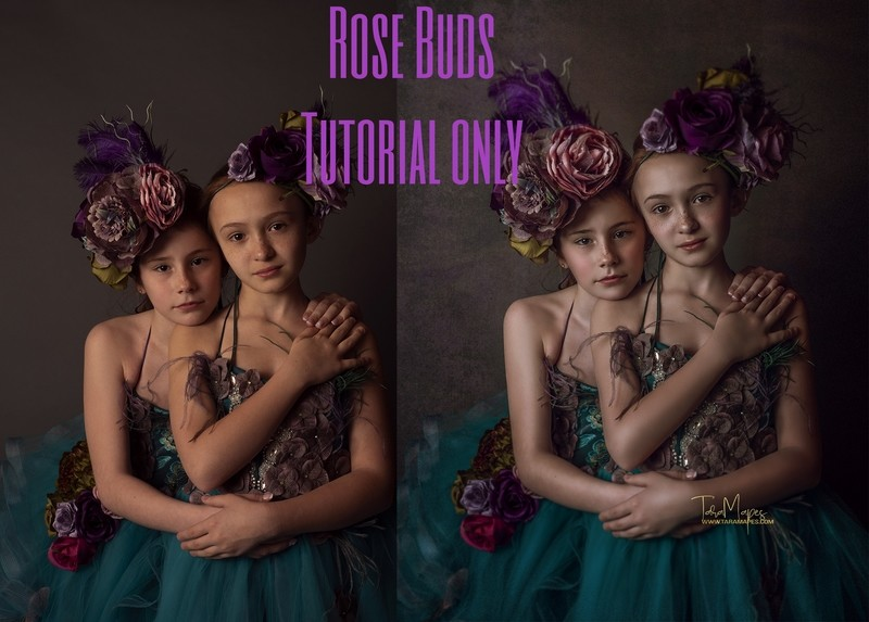 Rose Buds Fine Art Painterly Photoshop Tutorial ONLY- Fine Art Tutorial by Tara Mapes