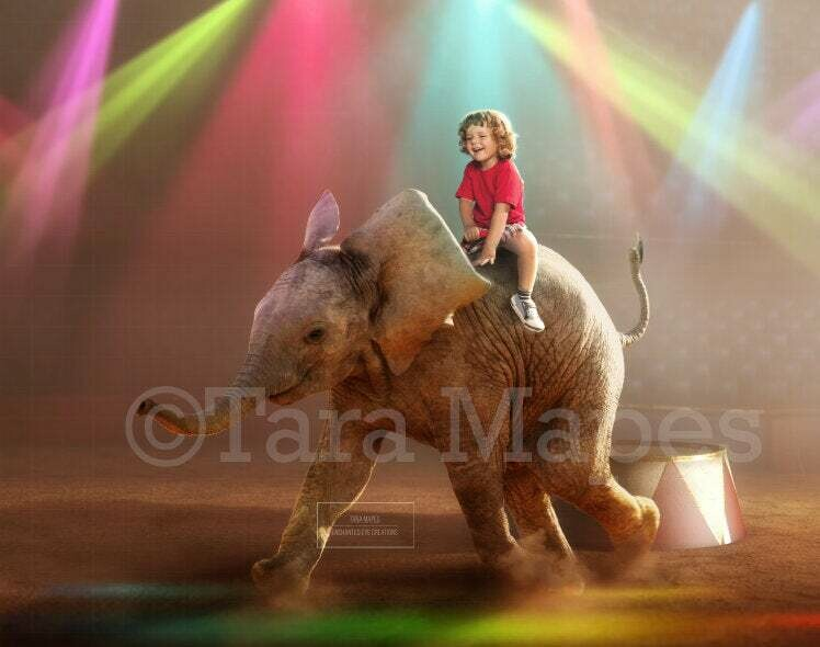 Baby Elephant in Circus Ring Arena Stage Digital Background Backdrop