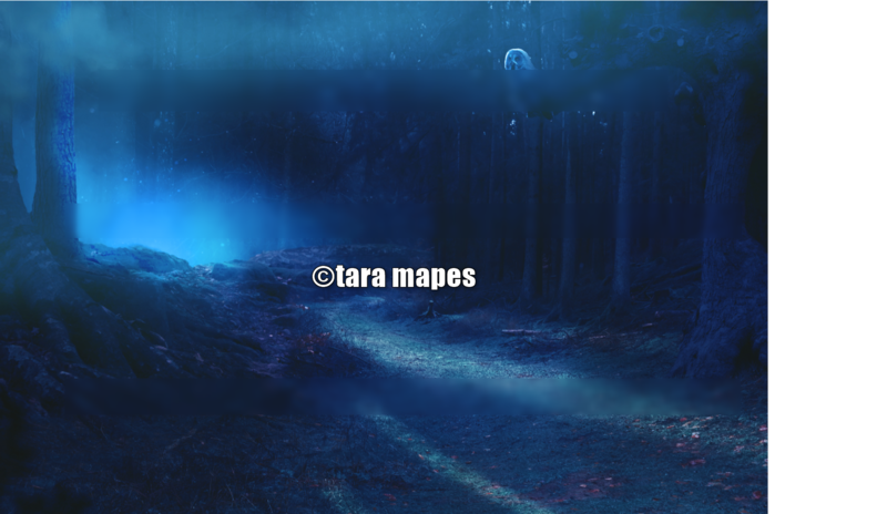 Woods at Night Scene with Owl Digital Background / Backdrop