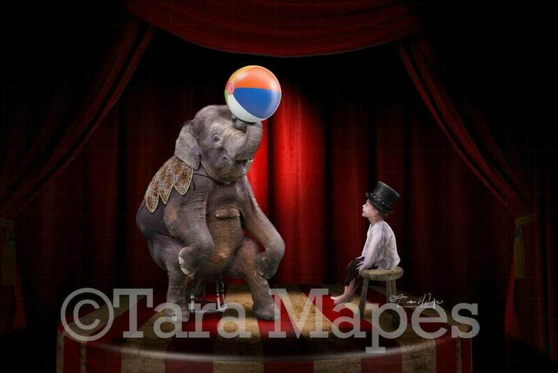 Big Top Circus Elephant on Stage Digital Background