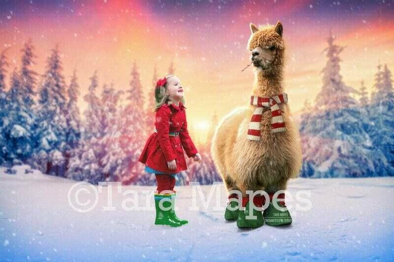 Christmas Alpaca - Winter Holiday  Digital Background - Alpaca digital backdrop - Funny Christmas Digital Background Backdrop