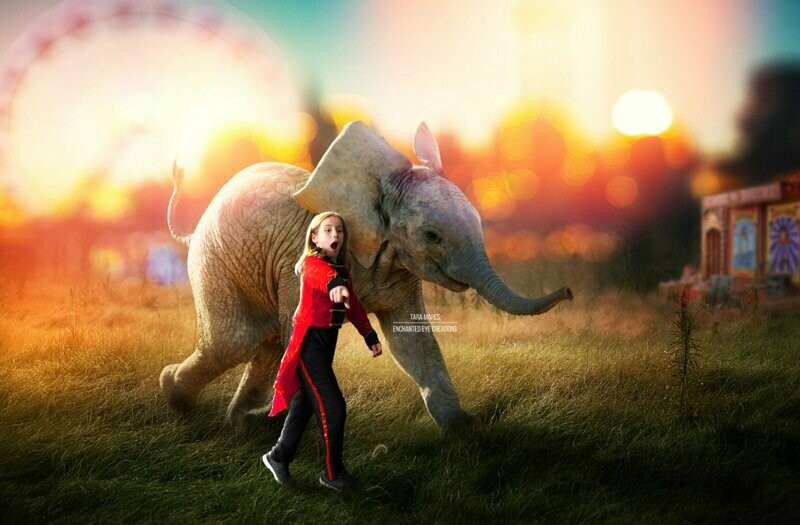 Elephant at Circus - Baby Elephant on Fairgrounds - in Field - Digital Background / Backdrop