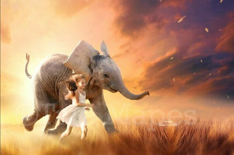 Elephant in Creamy Sunny Field - Baby Elephant Summer Spring - in Field - Digital Background / Backdrop