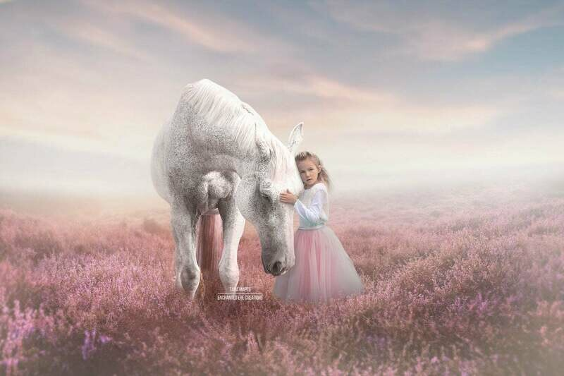 Horse in Field of Heather Lavender Flowers with Sun Creamy Pastel Digital Background Backdrop