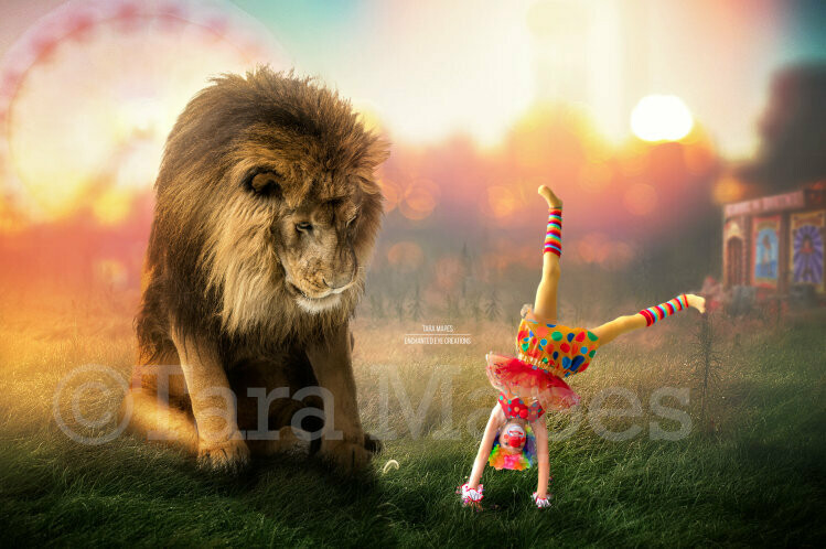 Lion at Circus - Lion Sitting Laying on Fairgrounds - in Field - Digital Background / Backdrop