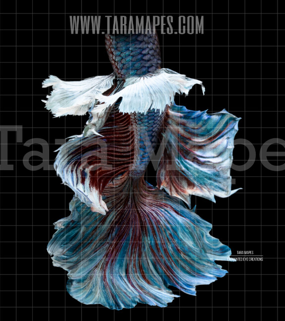 Realistic Mermaid Tail 3 - PNG  overlay - Transparent Background