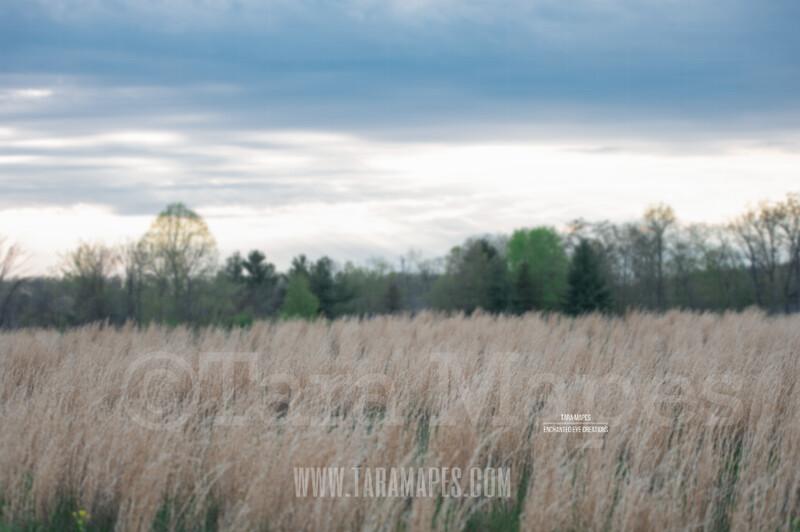 Spring Field  $1 Digital Background Backdrop by Tara Mapes