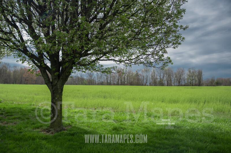 Spring Tree $1 Digital Background Backdrop by Tara Mapes