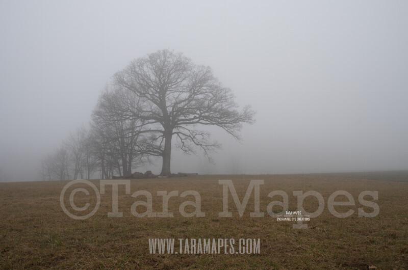Foggy Trees 4 $1 Digital Background Backdrop