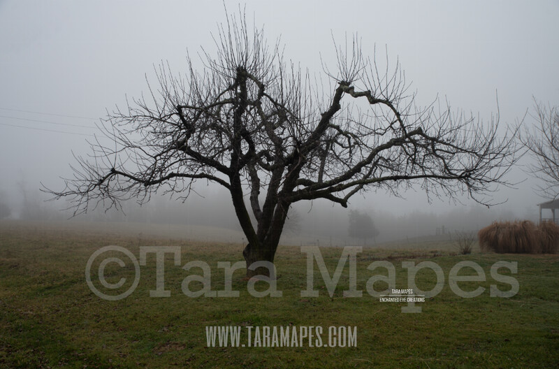 Foggy Trees 3 $1 Digital Background Backdrop