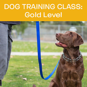 Item 04. Online Dog Obedience Training Class—Gold Level