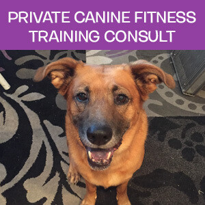 Item 08. Online Private Canine Fitness Training Consultation