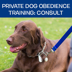 Item 05. Online Private Dog Obedience Training: Consultation