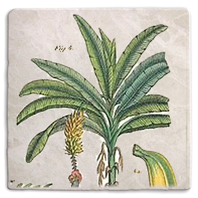 Tropical 09