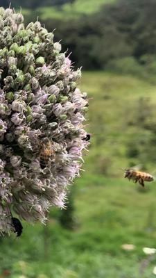 Miel de abeja 1/4 lt