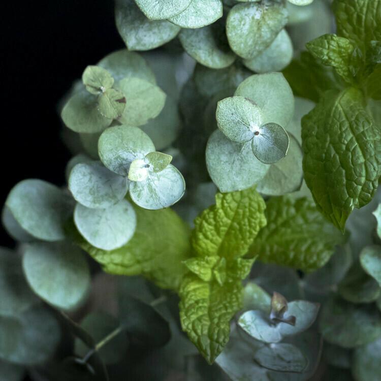Peppermint & Eucalyptus -Candles