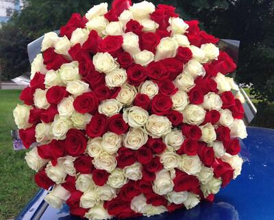 101 Роза Микс Красное Белое