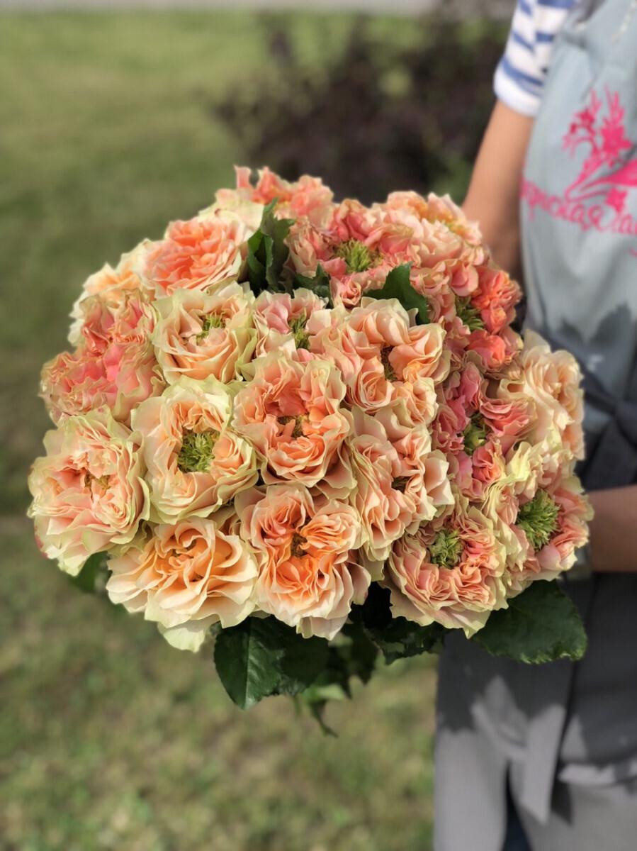 Эксклюзив Пионовидная роза Премиум