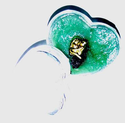 See Pheung In Dood Jidt Maha Sanaeh - Enchantment Potion With In Koo & Black Necromantic Powders - Pra Ajarn Somchart