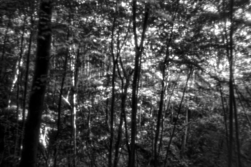 Sunbeams through the woods 3