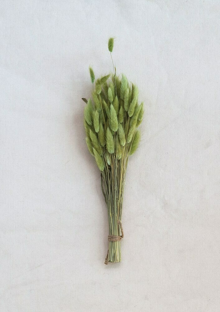 Dried Bunny Tail Grass Bunch