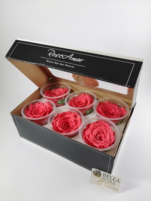 Caja de 6 Rosas Preservadas Rosada Claro