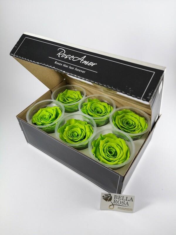Caja de 6 Rosas Preservadas Verdes