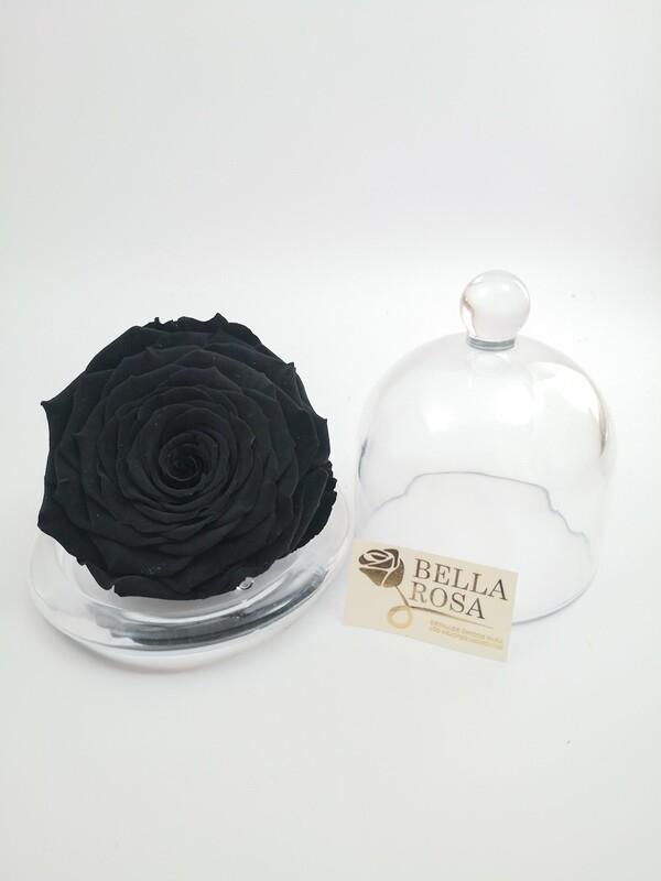 Rosa Negra preservada XXL con Cúpula