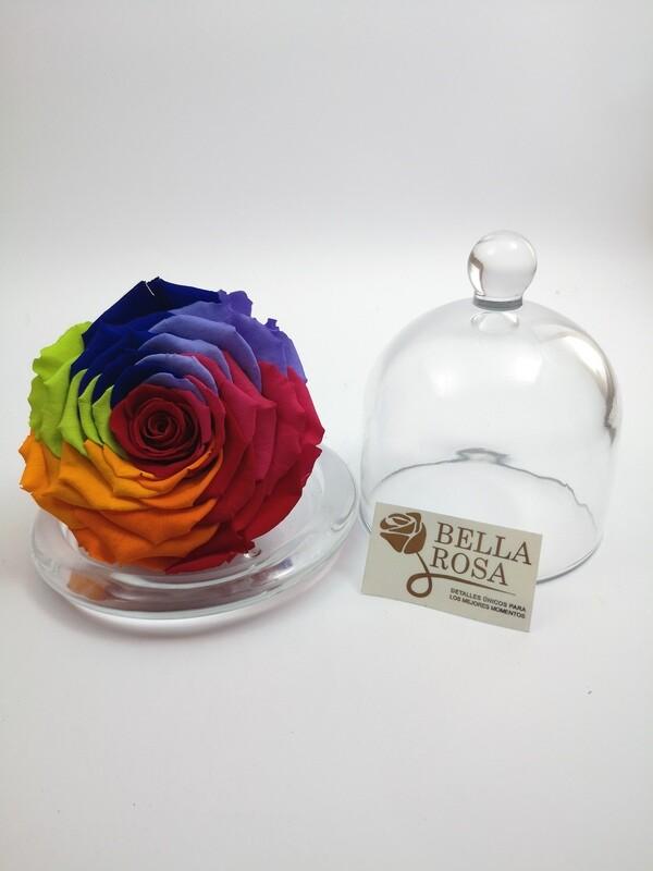 Rosa Arcoíris preservada XXL con Cúpula