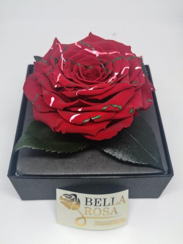 Rosa Preservada Roja con lineas de colores en Caja Acrílica