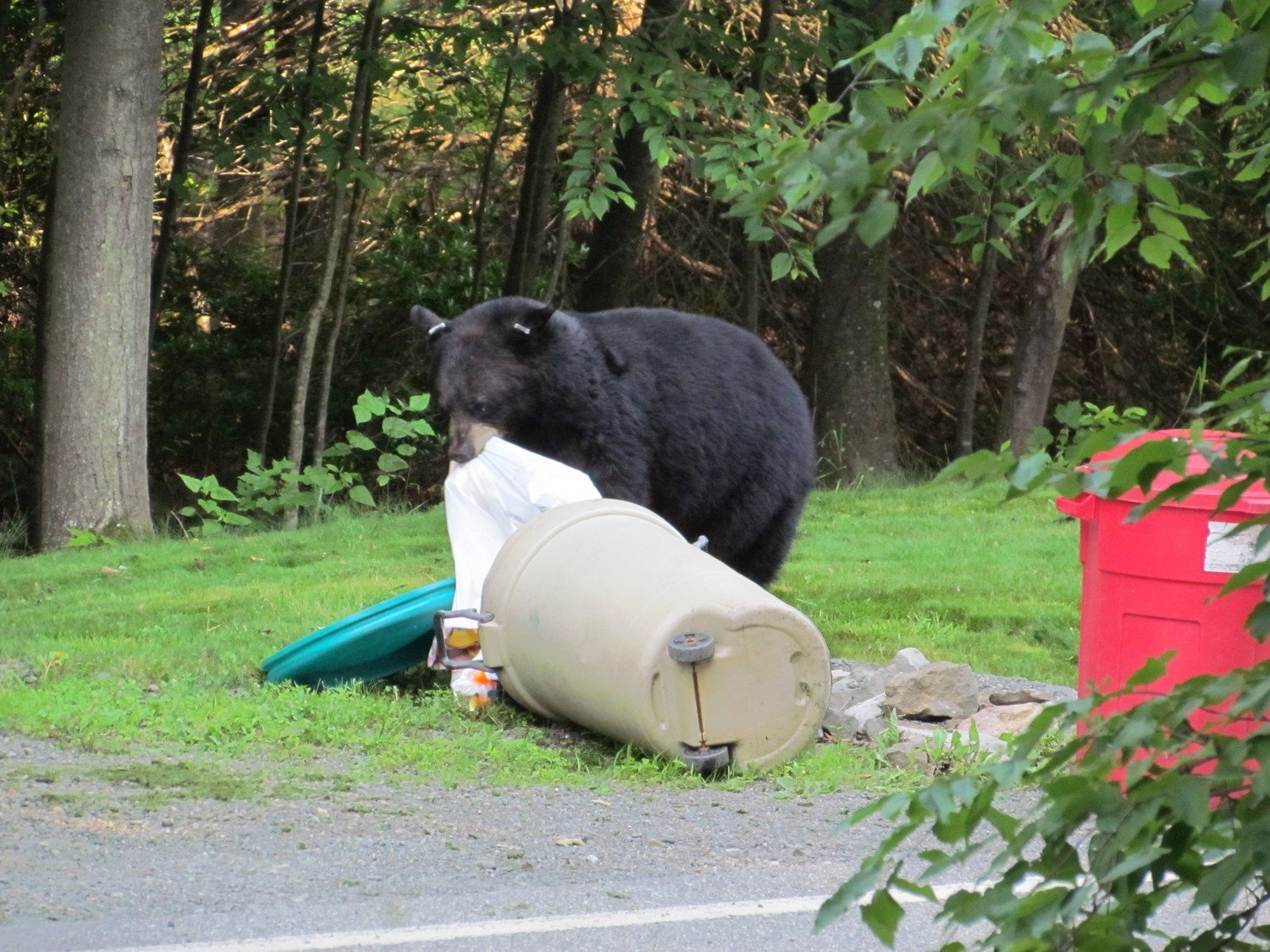 Community Ordinances (Anti-feeding Regs for Bears)