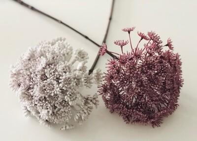Stemmed Allium