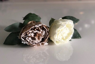 Snow Touched Peony