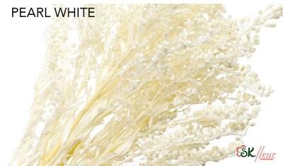 Solidago / Pearl White
