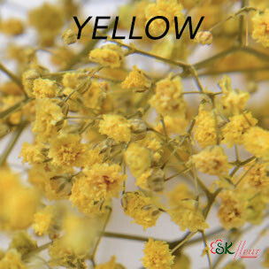 Gypsophila / Yellow
