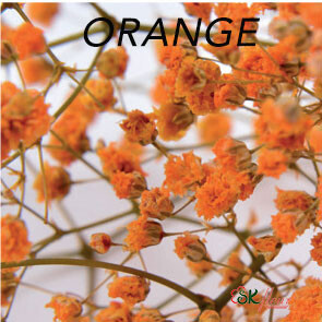 Gypsophila / Orange