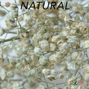 Gypsophila / Natural
