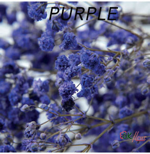 Gypsophila / Purple