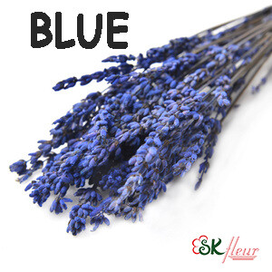 Lavender Flower / Blue