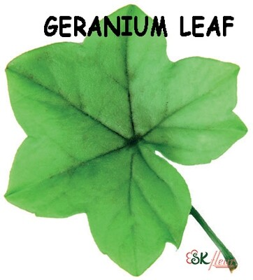 Geranium Leaf / Green