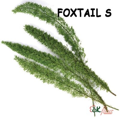 Foxtail S / Green