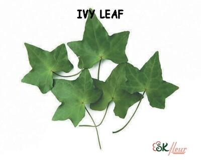 Ivy Leaf / Green