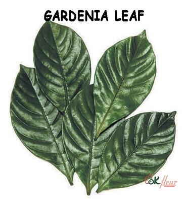 Gardenia Leaf / Green